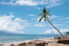 Paume près de la côte d'océan Photographie stock libre de droits