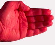 Paume rouge sur le fond blanc Photos stock
