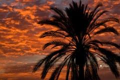 Paume silhouettée dans le coucher du soleil Photo stock