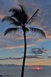 Paume solitaire au coucher du soleil Photos libres de droits