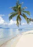 Paume sur la plage images stock