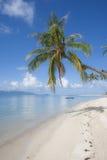 Paume sur la plage photographie stock libre de droits