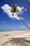 Paume sur la plage exotique photo libre de droits