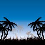 Paume trees Photo stock