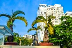 Paume tropicale dans le pot avec des gratte-ciel sur le fond sous la lumi?re du soleil sur la station de vacances photo libre de droits