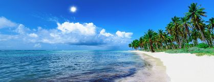 Paume tropicale de plage de paradis la mer des Caraïbes photo libre de droits
