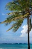 Paume tropicale sur la côte sur le ciel bleu avec le nuage blanc et le fond bleu-vert d'océan Photos stock
