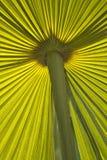 Paume verte affectueuse Image libre de droits