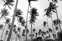 Paumes Photographie stock libre de droits