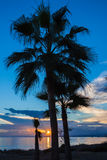 Paumes au coucher du soleil Images stock