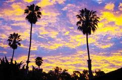 Paumes au coucher du soleil Photos libres de droits