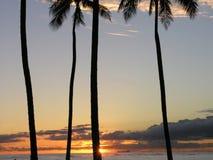 Paumes au coucher du soleil Photographie stock