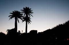 Paumes au crépuscule Photographie stock libre de droits