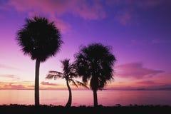 Paumes au lever de soleil Images libres de droits