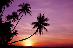 Paumes au lever de soleil Photo stock