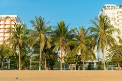 Paumes avec des noix de coco et bâtiments modernes sous la lumière du soleil à l'aube pendant le matin photo stock