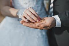 Paumes avec les anneaux de mariage 2401 Photo libre de droits