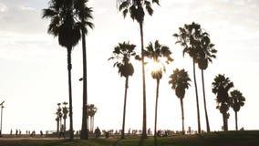 Paumes chez Venice Beach éclairé à contre-jour par un coucher de soleil banque de vidéos