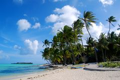 Paumes dans Bora Bora Photographie stock libre de droits
