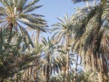 Paumes dans l'oasis photos libres de droits