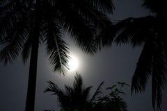 Paumes dans le clair de lune Image stock