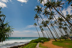 Paumes dans Sri Lanka Photographie stock