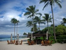 Paumes de balancement sur l'île hawaïenne photos stock