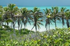 Paumes de Cancun Photographie stock