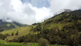 Paumes de cire sur la colline image stock