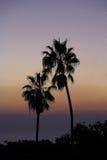 Paumes de coucher du soleil photo libre de droits
