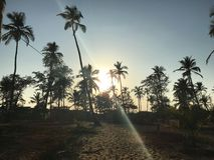 Paumes de coucher du soleil Photos libres de droits