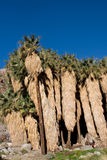 Paumes de désert Image stock