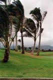 Paumes de Kauai balançant dans la brise photographie stock libre de droits
