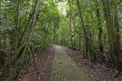 Paumes de marche le long d'une pluie Forest Path photo stock