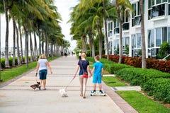 Paumes de Miami et bâtiment d'hôtel Photo stock