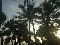Paumes de Sri Lanka Photographie stock libre de droits