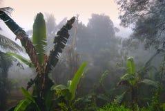 Paumes en brouillard image libre de droits