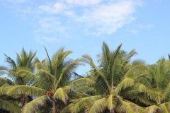 Paumes en Costa Rica Photo libre de droits