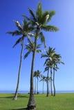 Paumes en parc de plage Photographie stock libre de droits