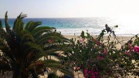 Paumes en vacances à Fuerteventura en hiver images stock
