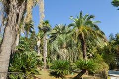 Paumes et Cycas en vieux parc subtropical Images stock