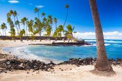 Paumes et logements hawaïens antiques Photo libre de droits
