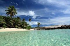 Paumes et océan. Images libres de droits