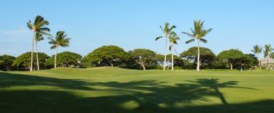 Paumes et ombres sur une zone de golf Images libres de droits