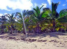 Paumes et plage dominicaines images stock