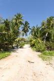 Paumes et route tropicales parfaites photos stock