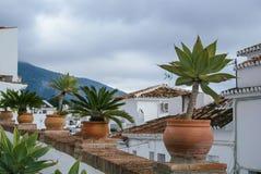 Paumes et usines de maison dans les pots se tenant au-dessus du toit au village espagnol blanc méditerranéen traditionnel, Mijas Image stock