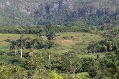 Paumes, forêt et collines au Cuba Photo libre de droits