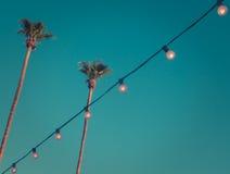 Paumes grandes de rétro style au coucher du soleil avec les lumières et l'espace de copie Photo stock