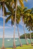 Paumes le long de la côte d'Ile Royale en Guyane française française photographie stock